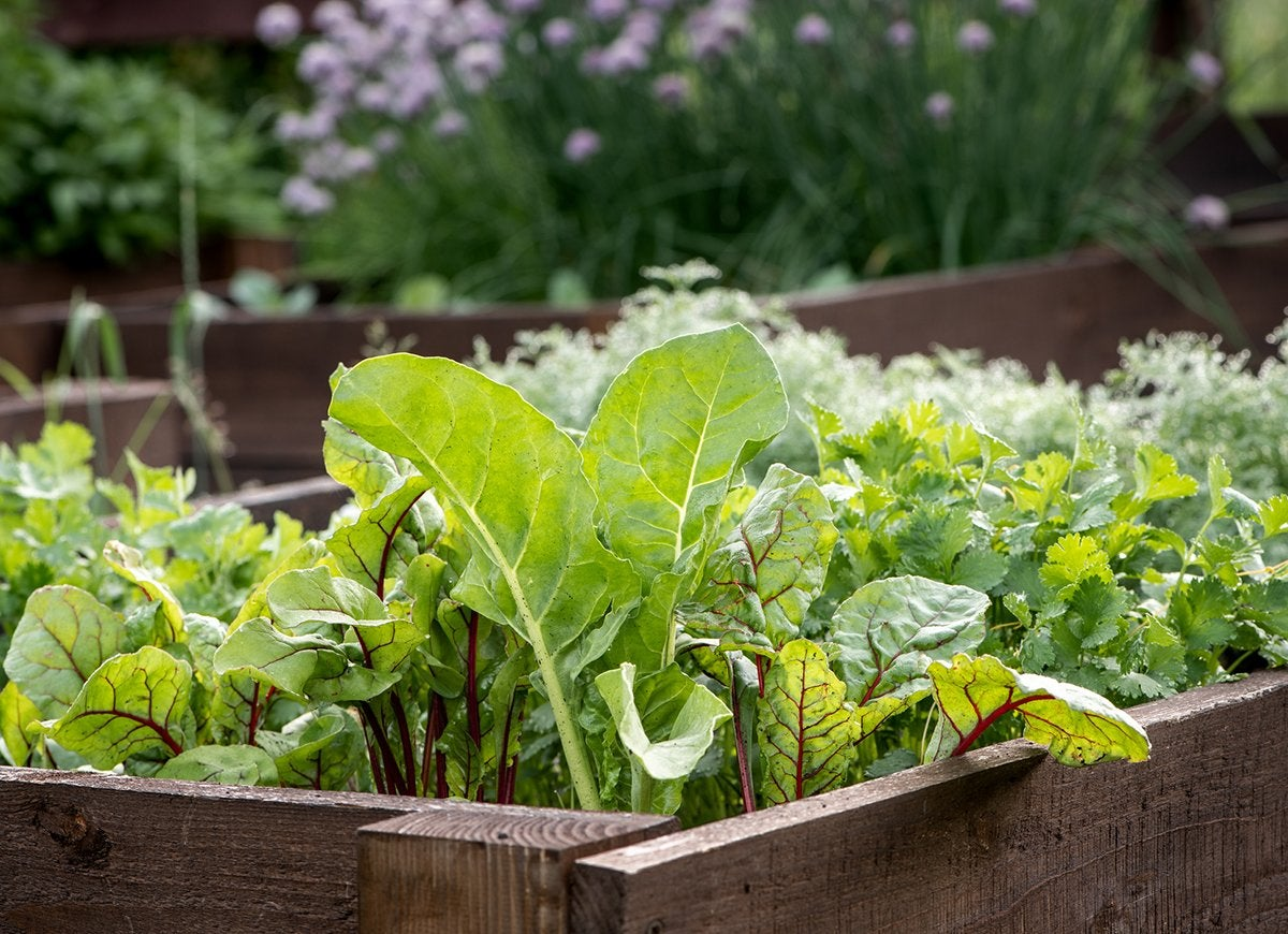 12 Fast-Growing Vegetables for Your Home Garden