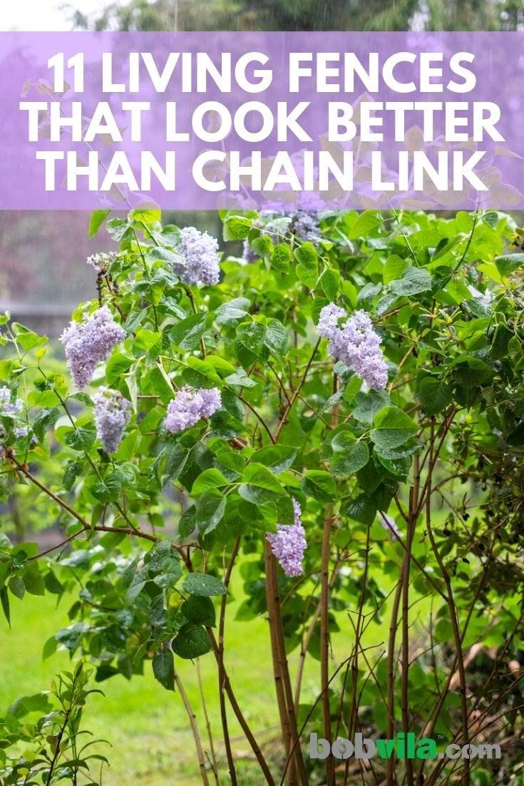 Living Fence Ideas 11 Approaches To A Landscape Boundary Bob Vila