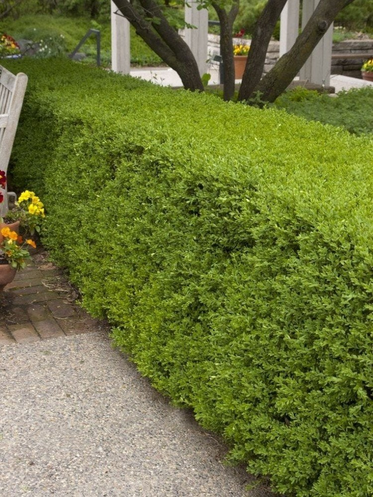 20 Border Plants Perfect For Lining Your Path Or Driveway Bob Vila