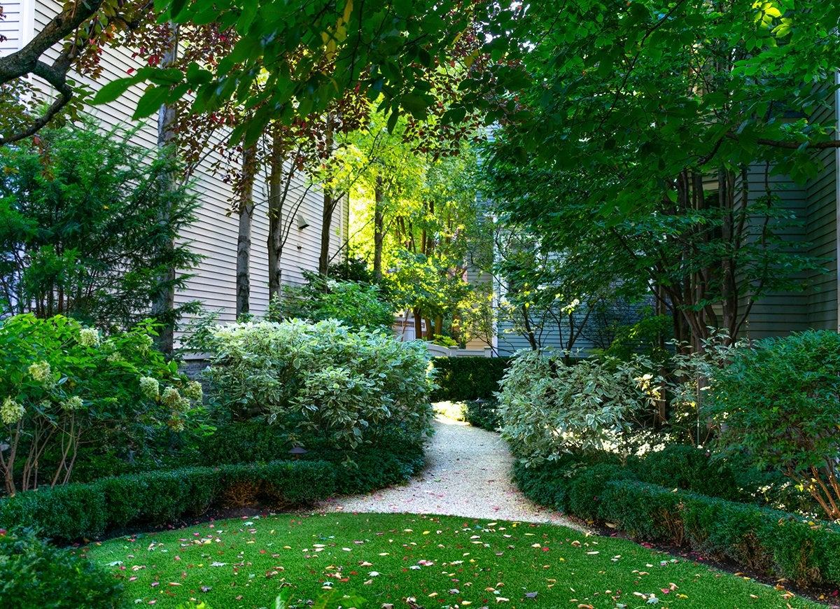 Grow These 14 Plants Under Trees With Ease Bob Vila