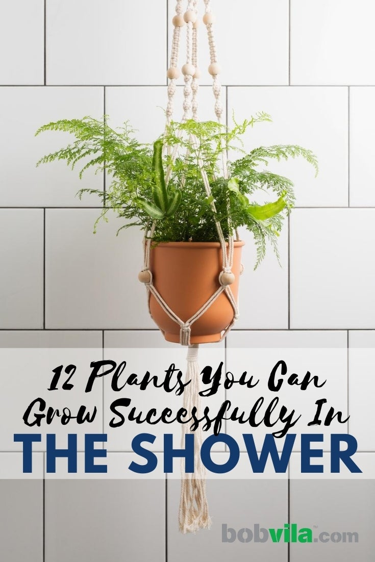 12 Shower Plants That Will Thrive In The Bathroom Bob Vila Bob Vila