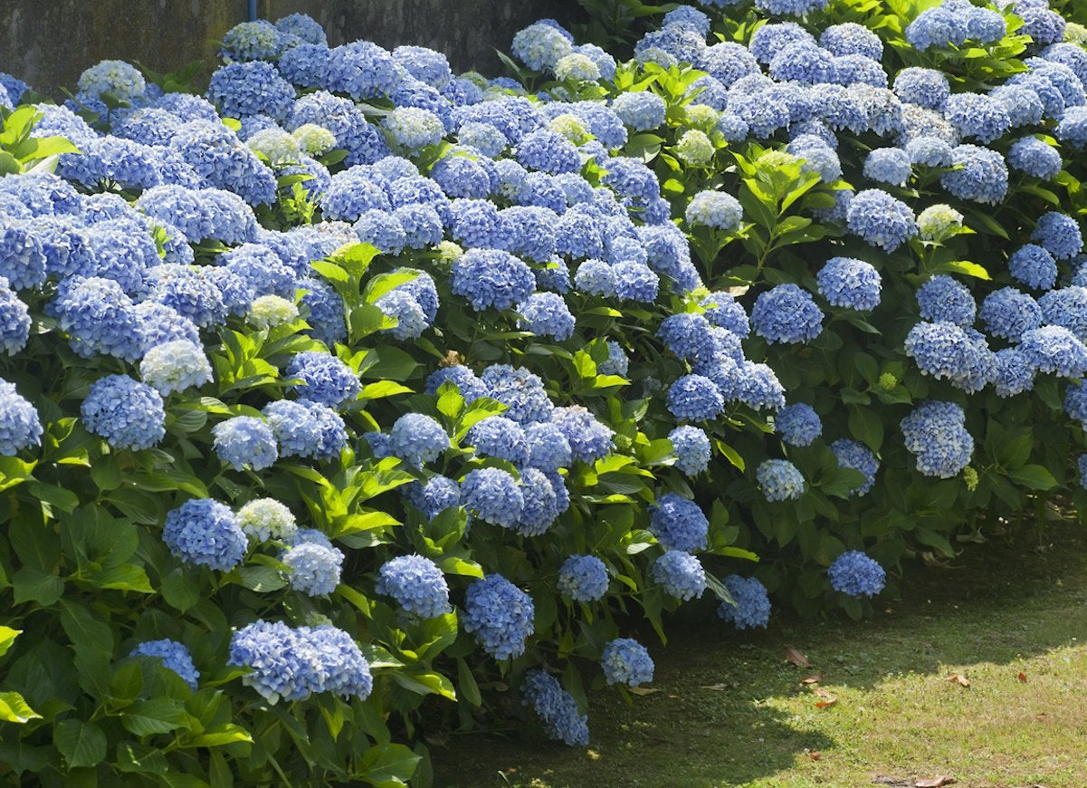 Shade Plants 20 That Don T, Outdoor Plants That Does Not Need Sunlight