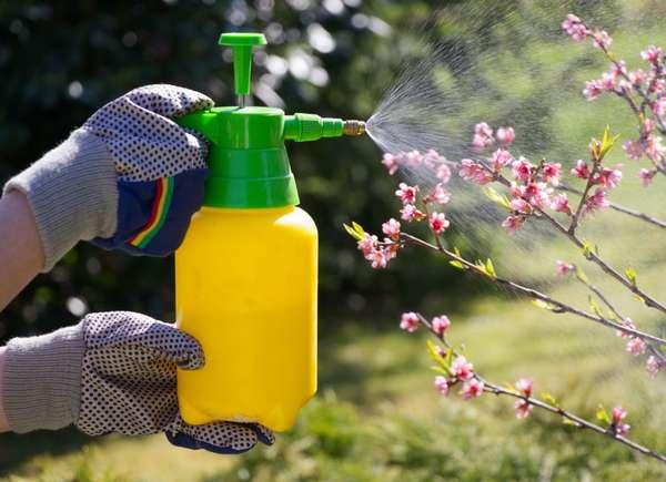 controla insectos por favor
