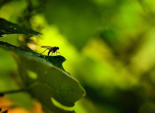 control de mosquitos por favor