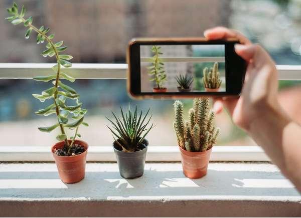 Tomando fotografías de plantas con teléfono