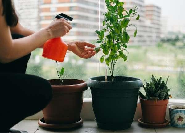 Planta de pulverización de mujer con botella de spray