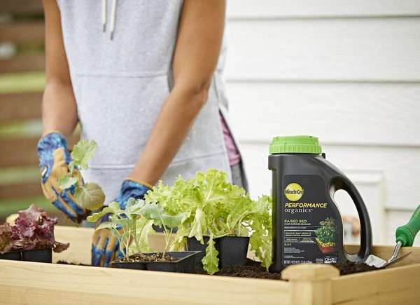 fertilizante cama de jardín elevada