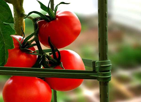 jaulas de tomate camas de jardín elevadas