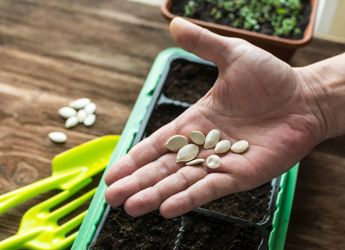 10 Gardening Projects to Tackle Now to Make 2021 Your Best Season Yet