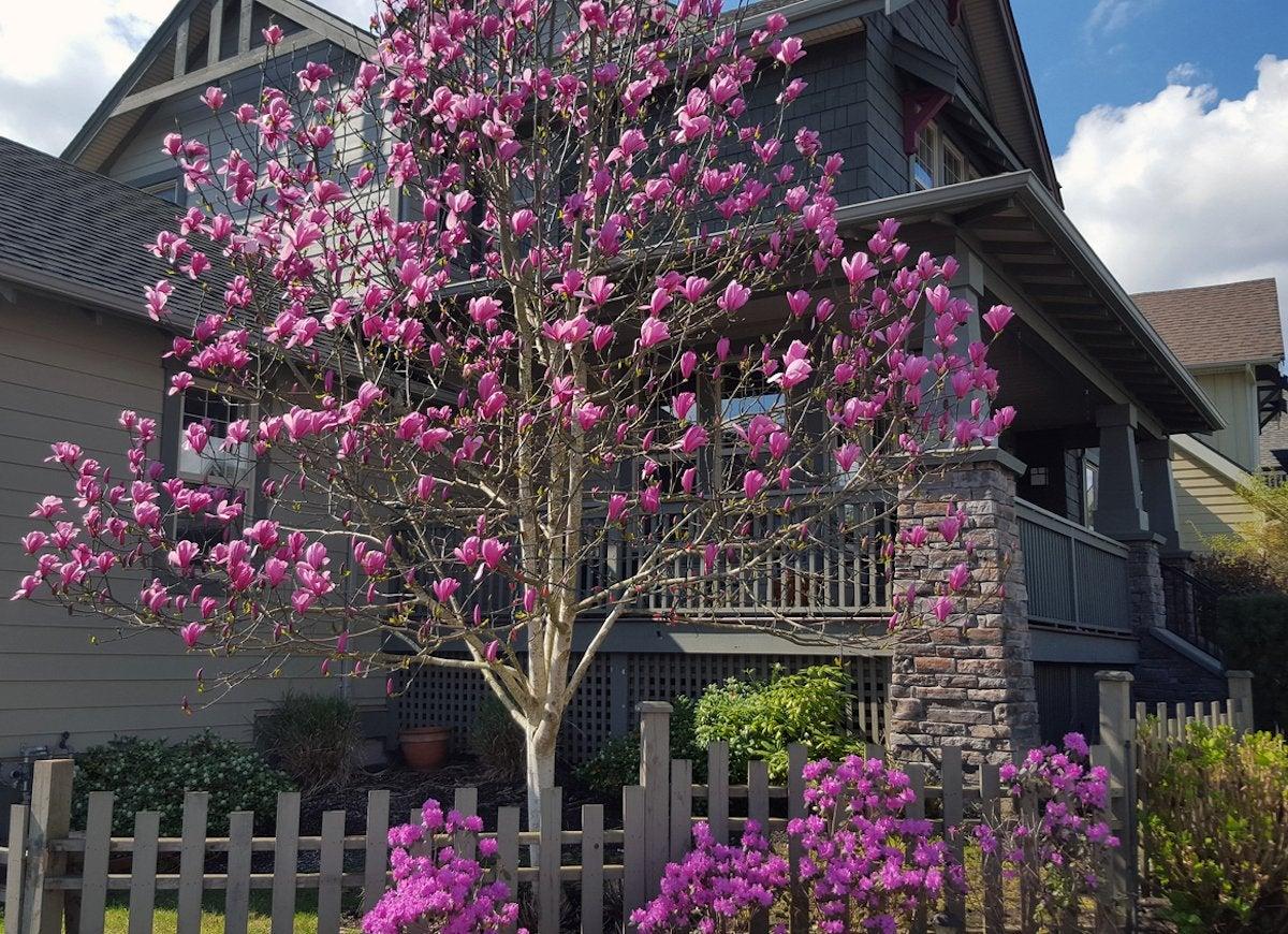 Front Yard Landscaping 12 Expert Tips Bob Vila