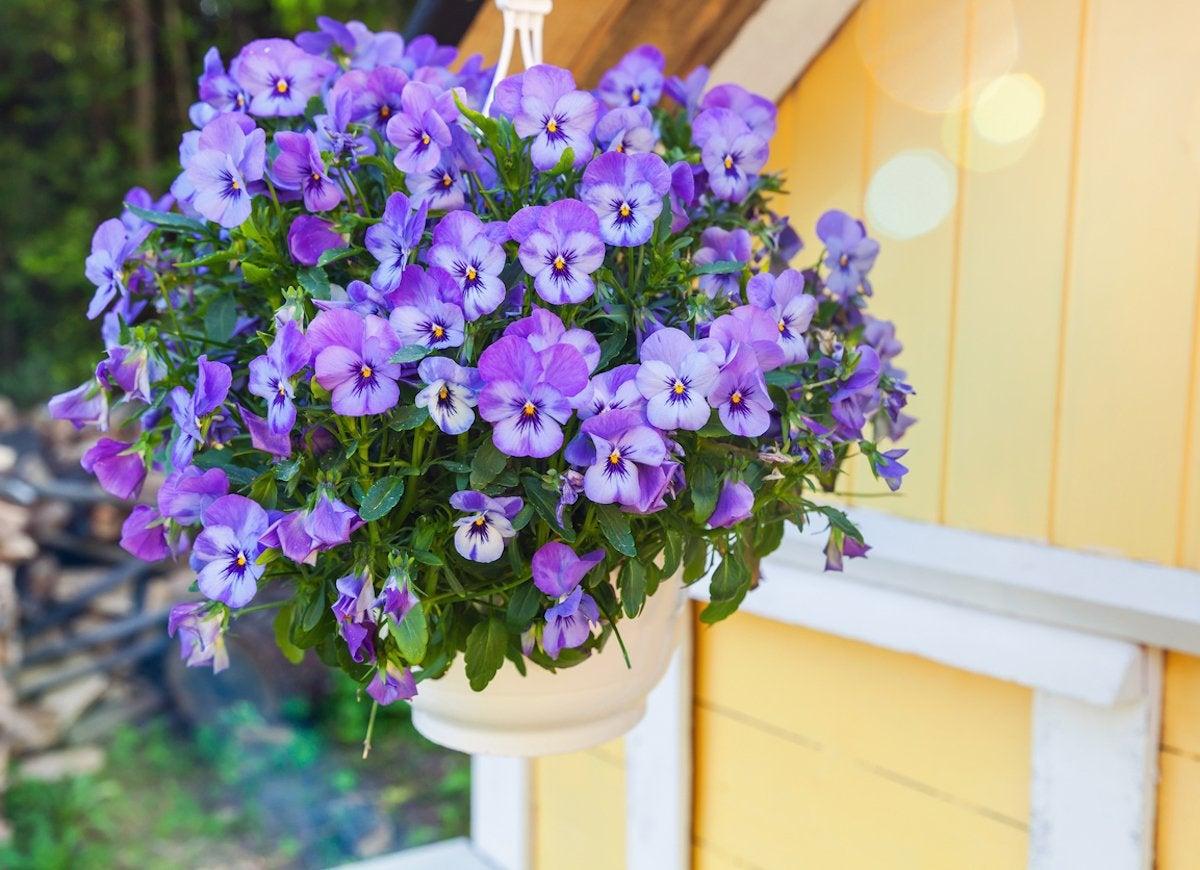 18 Best Hanging Plants For Indoors And Out Bob Vila Bob Vila