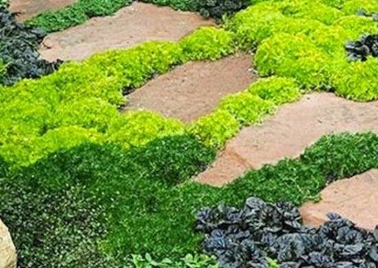 Lawn Alternatives 10 Ways To Keep Off, How To Replace Grass With Ground Cover